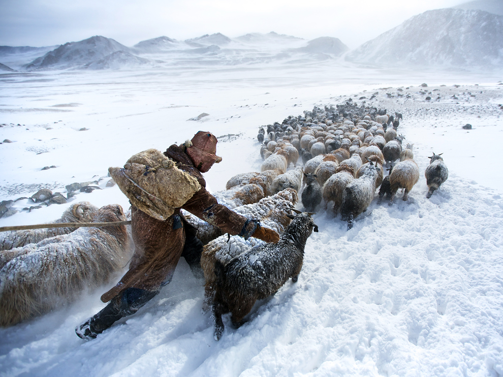5herder-altay-mountains-mongolia 76618 990x742